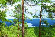 Waldblick auf See klein